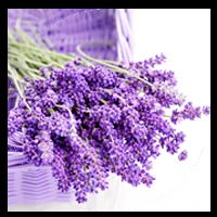 lavenderoil.png